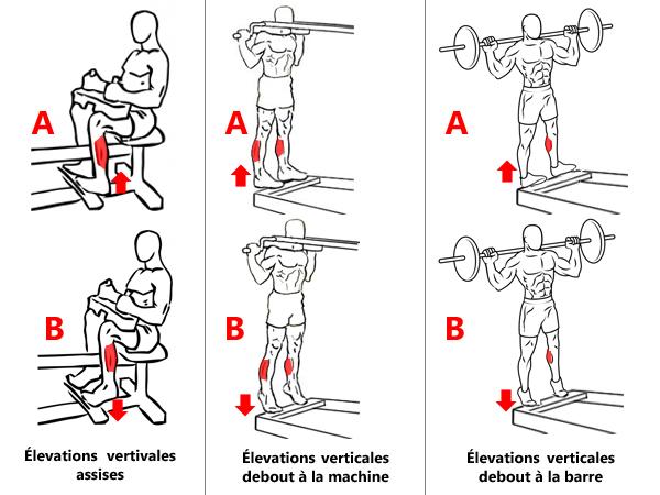 Exercices pour l'isolation des mollets