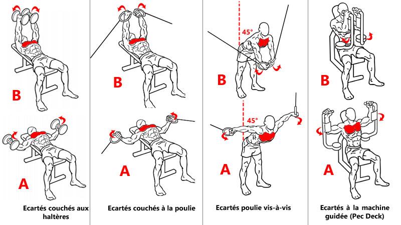 Exercices d'isolation ciblant les pectoraux