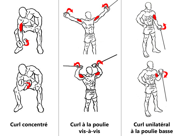 Exercices de finition pour biceps