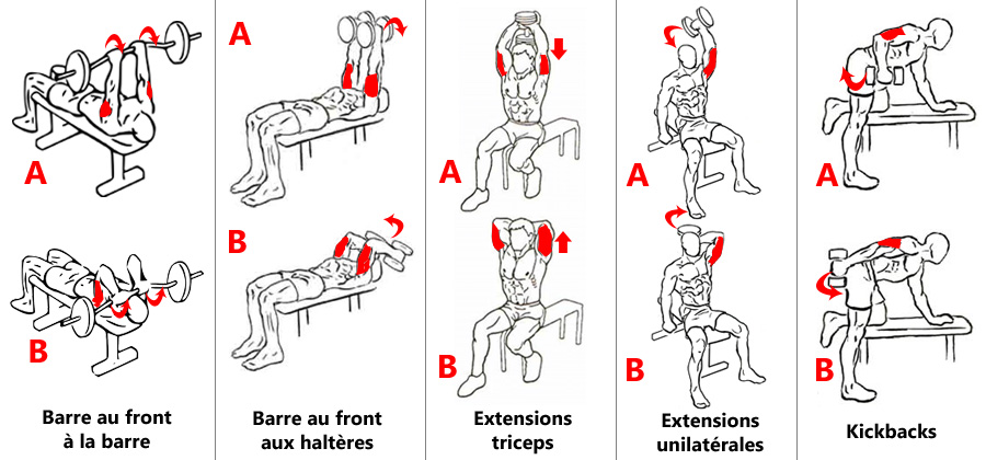 Exercices d'isolation des triceps aux charges libres